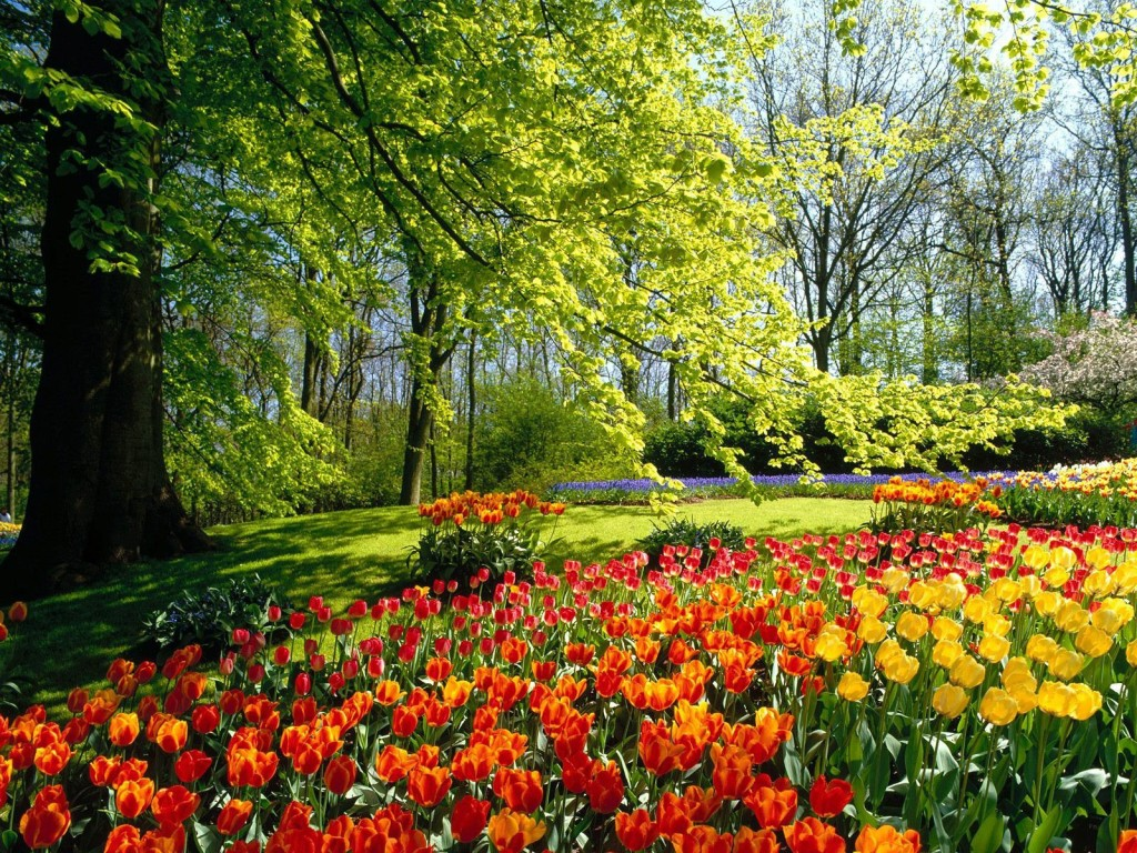 Spring Ayurveda